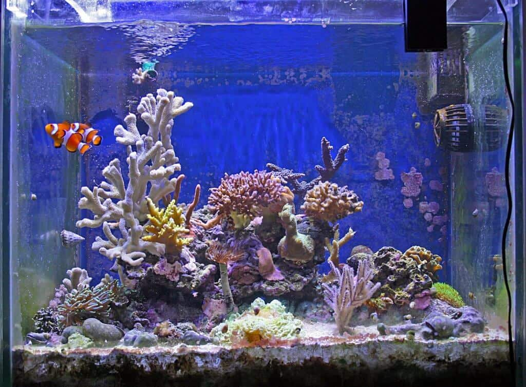 best nano aquariums