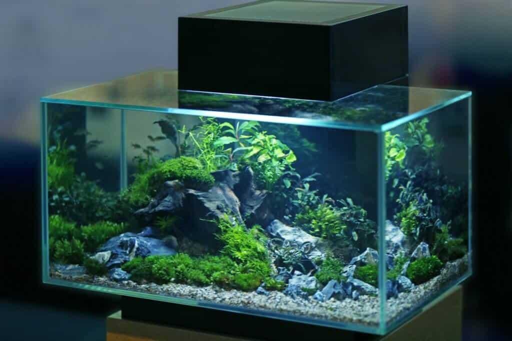 medium size fish tank