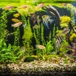 how to stock a freshwater aquarium
