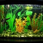 best bowfront aquarium