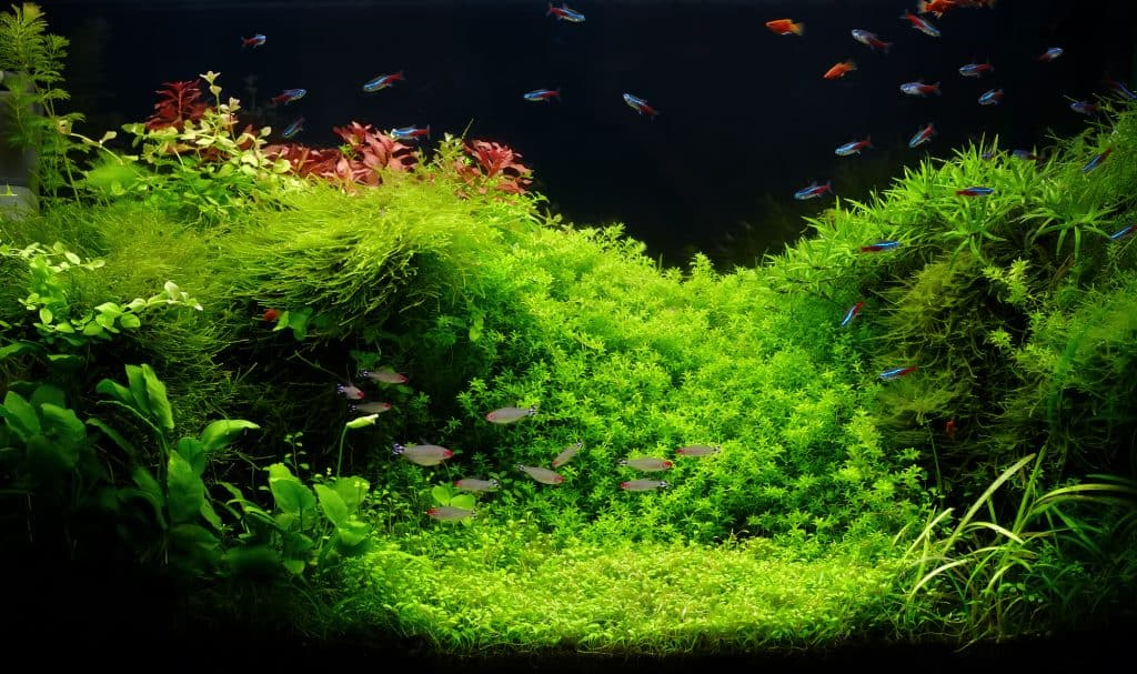 low light aquarium plants
