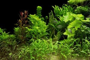 low light aquarium plants in tank