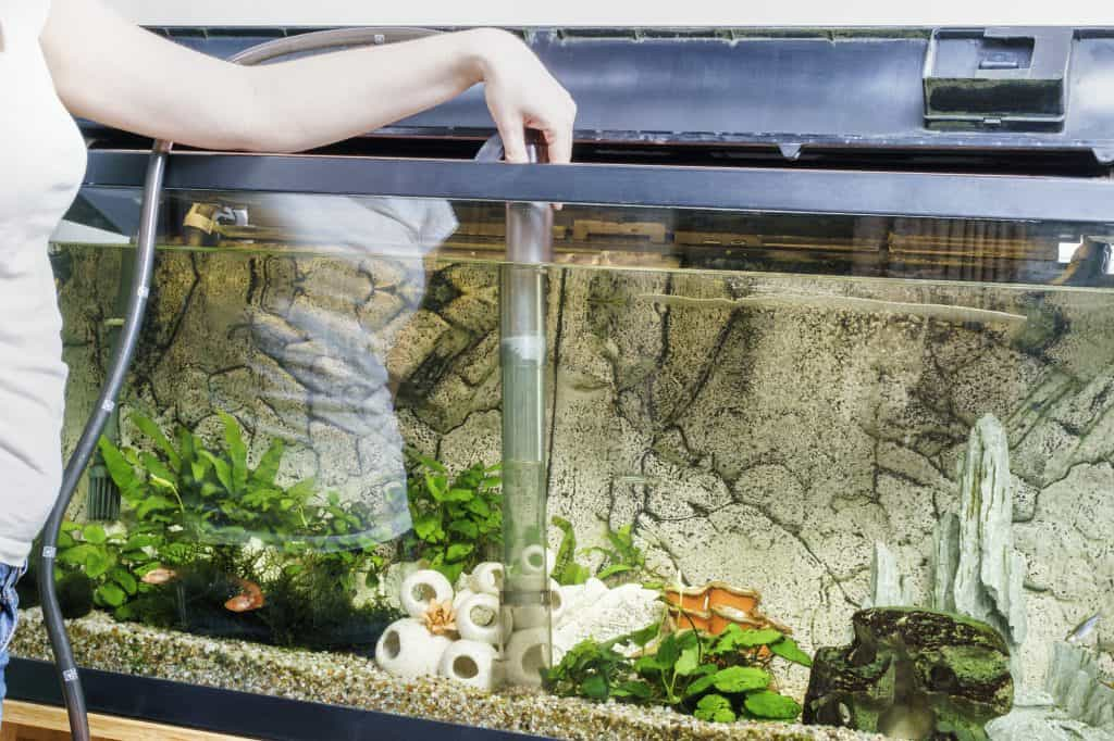 best self cleaning aquariums