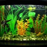 how to read a aquarium strip thermometer