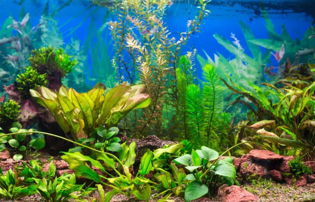 aquarium with plants