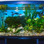 aquarium tank full of fish