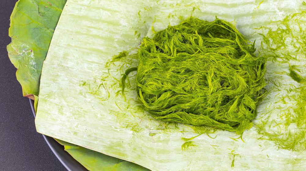 freshwater hair algae