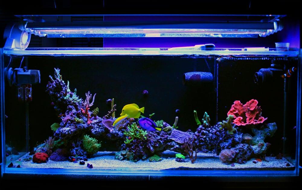 Saltwater coral reef fish tank