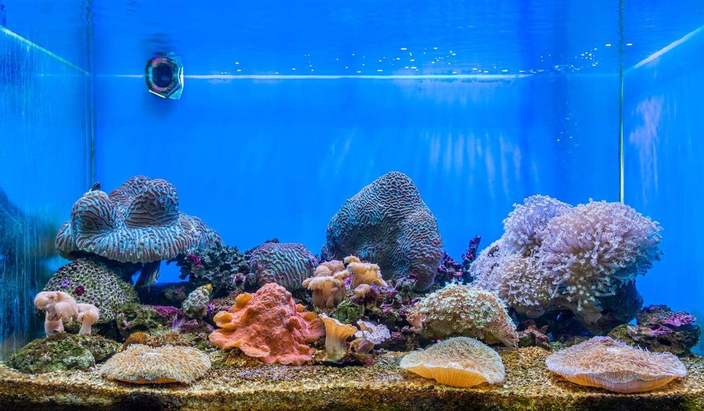 The art of corals reef aquarium