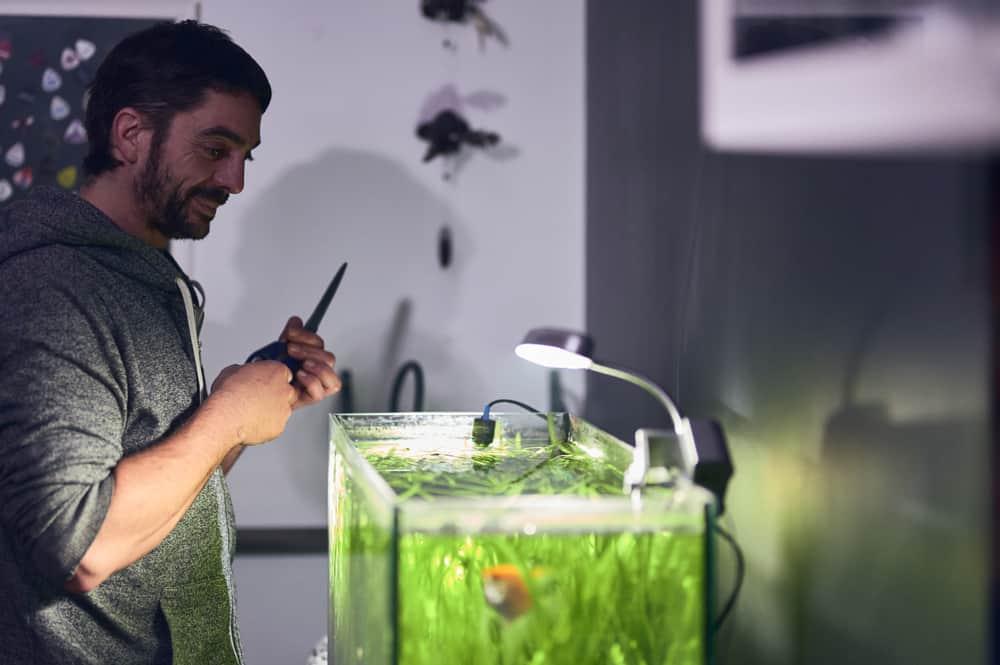 man looking at his aquarium with pruning scissors