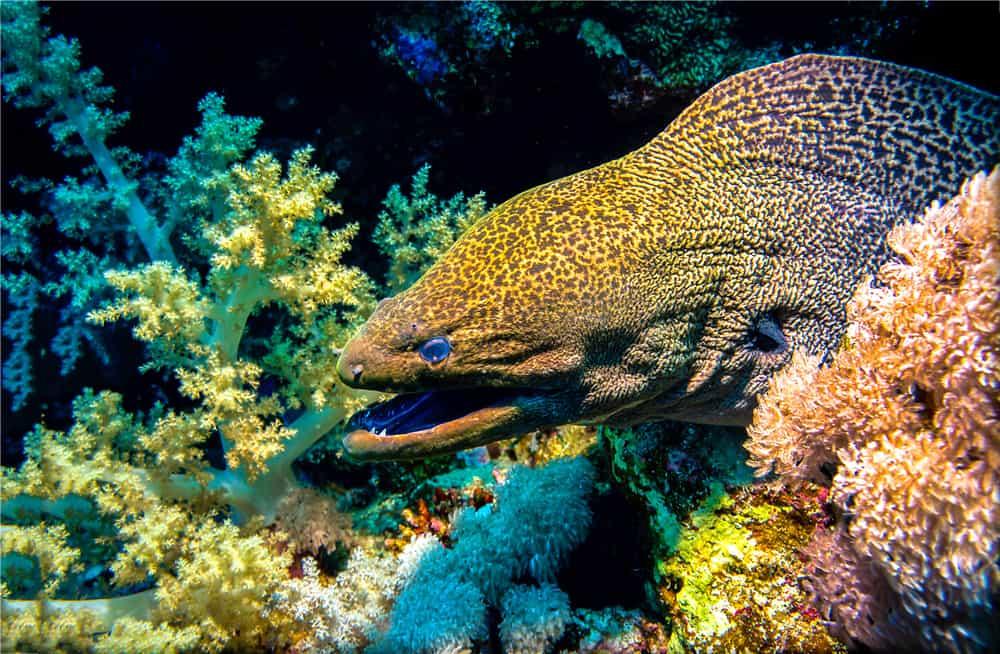 moray eel closeup