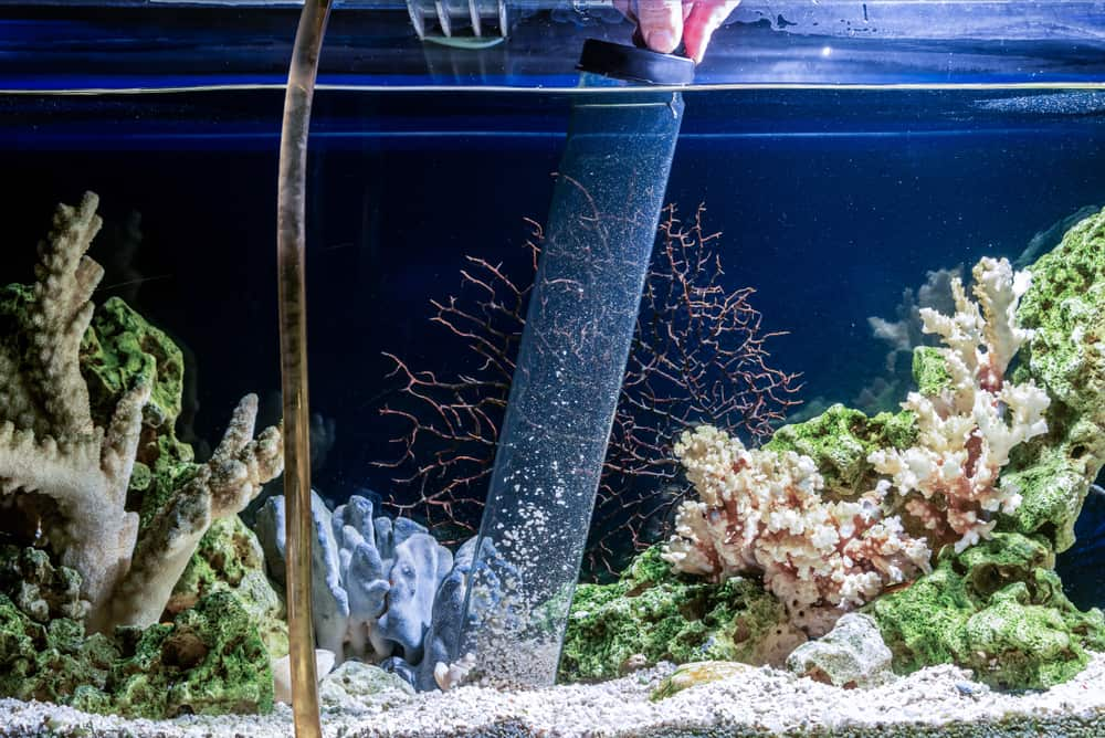 Cleaning of gravel in a freshwater aquarium