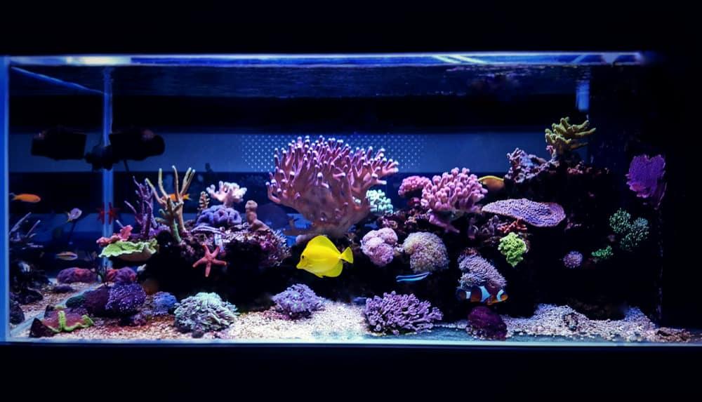 Coral reef aquarium tank scene