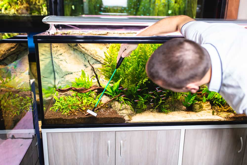 Male worker in aquarium shop cleaning fish tanks