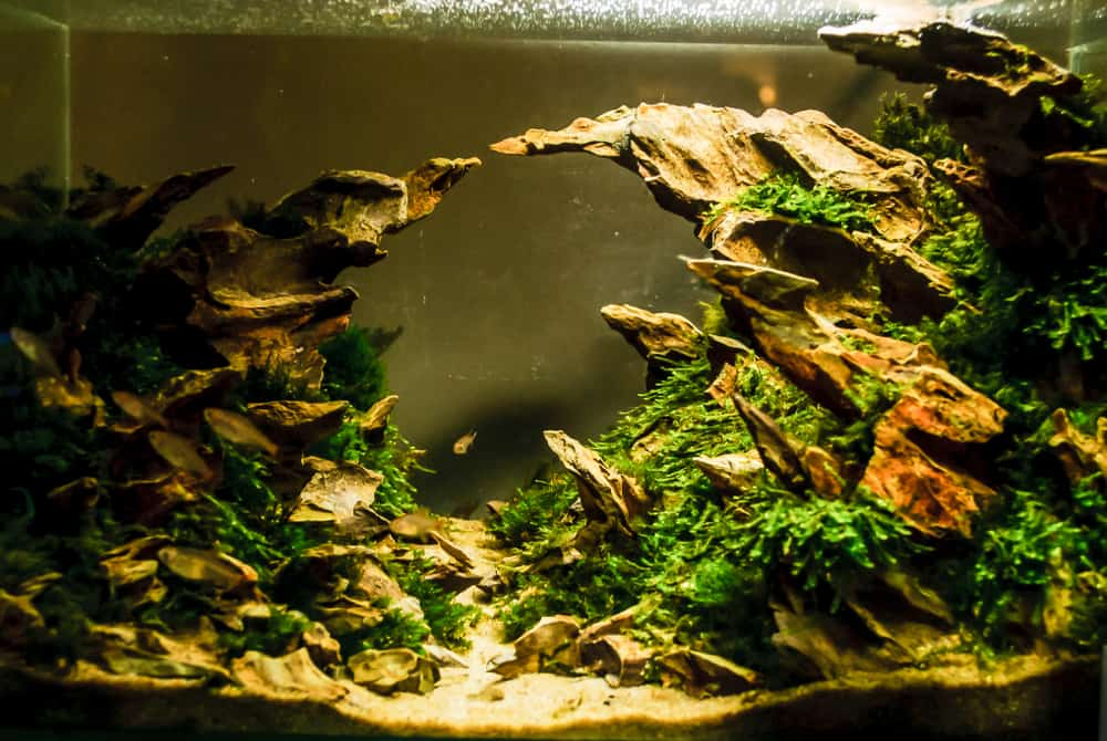 dark aquarium with rocks